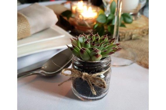 Podziękowania dla gości mini żywe sukulenty Dekoracje weselne wyjatkowymomen