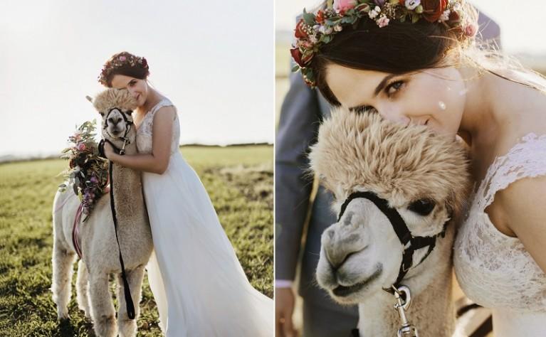 Izabela i Marcin - Bajeczna sesja poślubna z alpakami, Fotografia: Damian Łukasz Fotografia