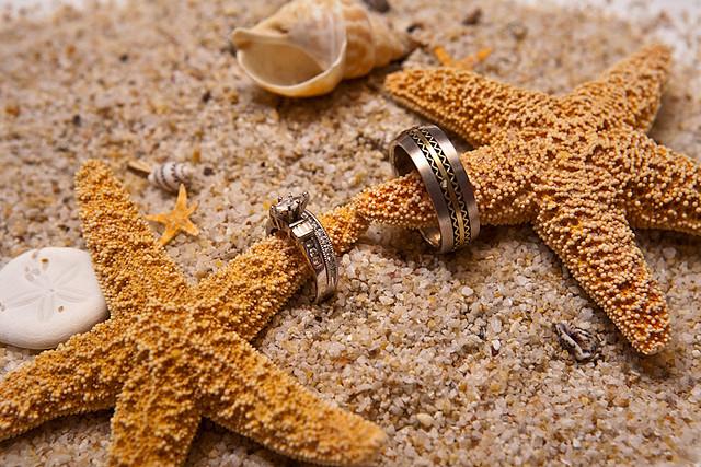 obraczki rozgwiazdy piasek morski