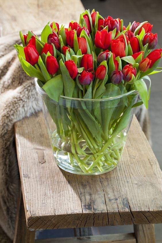 tulipany na lubie lub na g owie. Black Bedroom Furniture Sets. Home Design Ideas